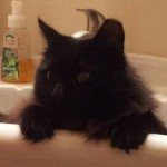 Ruffy in sink cropped